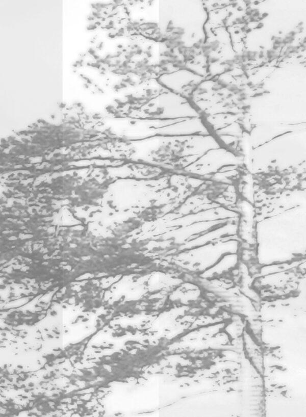 Panorama-grey-D