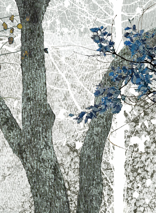 Winter-Blues-In-The-Woods-D