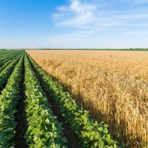 Global farmers can take on climate change. Here's how