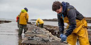 Aldi supports Scottish shellfish suppliers this Valentine's Day