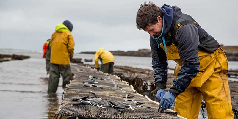Aldi supports Scottish shellfish suppliers this Valentine's Day