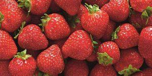 First Scottish strawberries of the season hit Aldi shelves