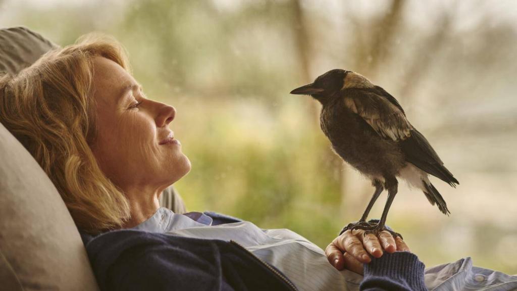 Critique « Penguin Bloom, l'oiseau guérisseur» (2020): Une vie suspendue à un battement d'aile ! - ScreenTune