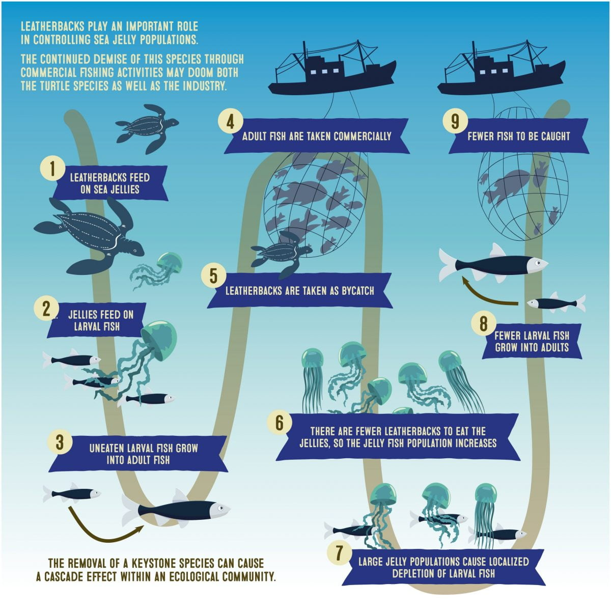 Overfishing threat to sea turtles