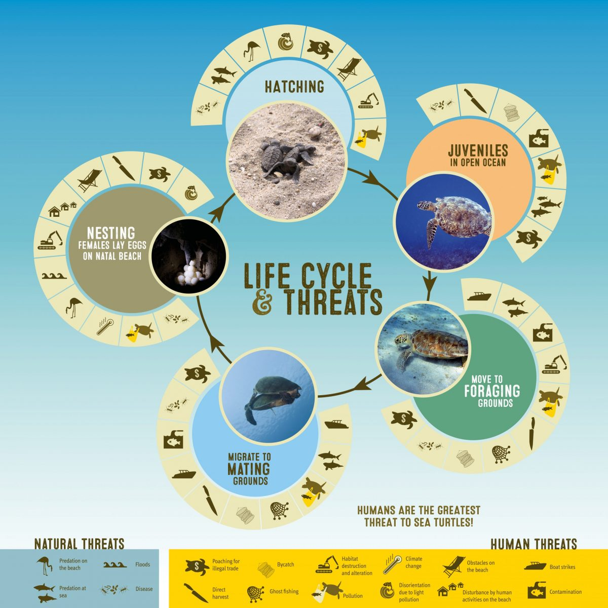 Threats to sea turtles