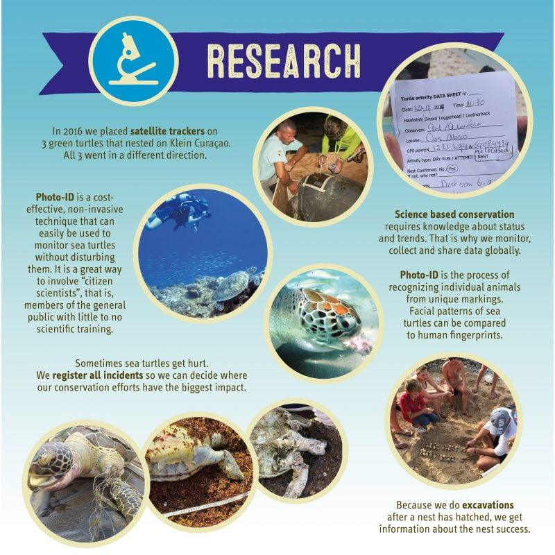 Research about sea turtles