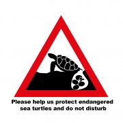 Don't disturb nesting sea turtles