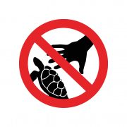 Don't touch sea turtles