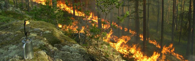 Foto: FSC - Forest Stewardship Council Sweden