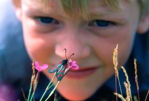 MatsWilhelm Framtidens entomolog