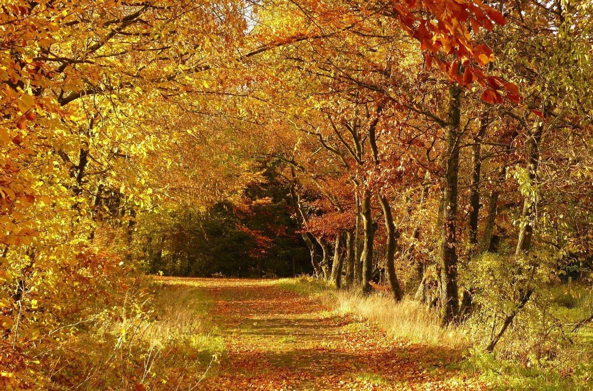 autumn-279408_1920 (1)