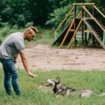 cynologist and husky dog training lying command with hand gesture