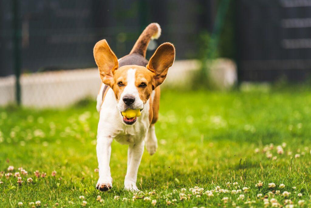 Hvorfor skal man endelig tage til hundetræning? Her forklarer vi hvad dig og din hund kan få ud af hundetræning og hvalpetræning.