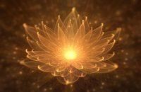 lotus-flower-01
