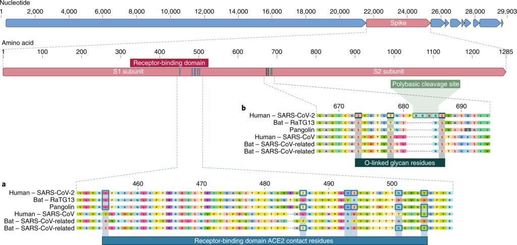 genoma covid-19
