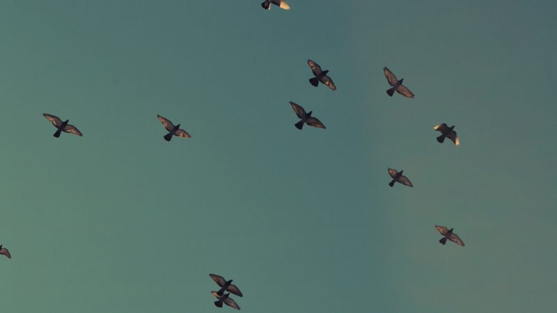 Birds in the sky