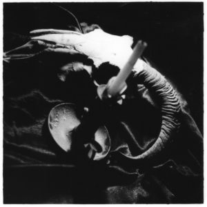 35mm black and white film photograph of sheep skull and candle vanities still life