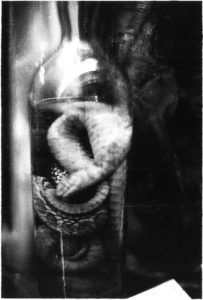 35mm black and white film photograph of snake in jar