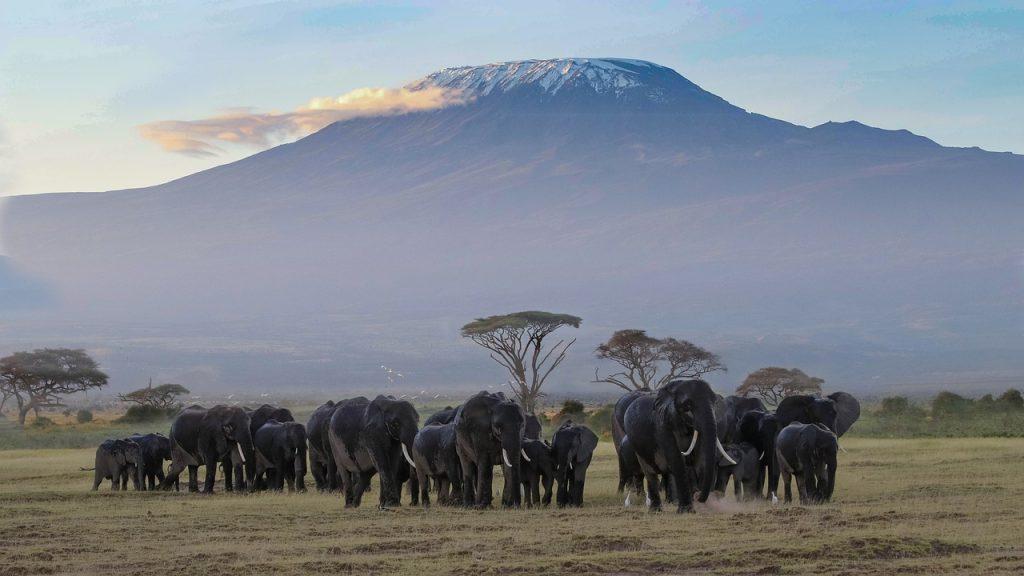 africa, kenya, amboseli