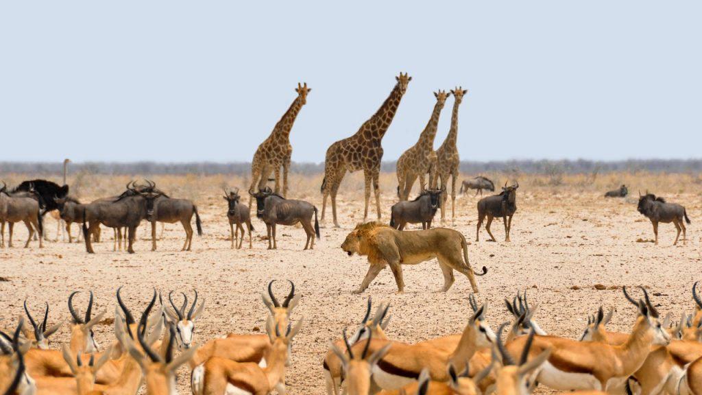 africa, namibia, nature