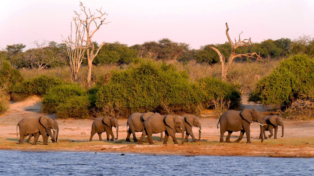 botswana, chobe, elephant