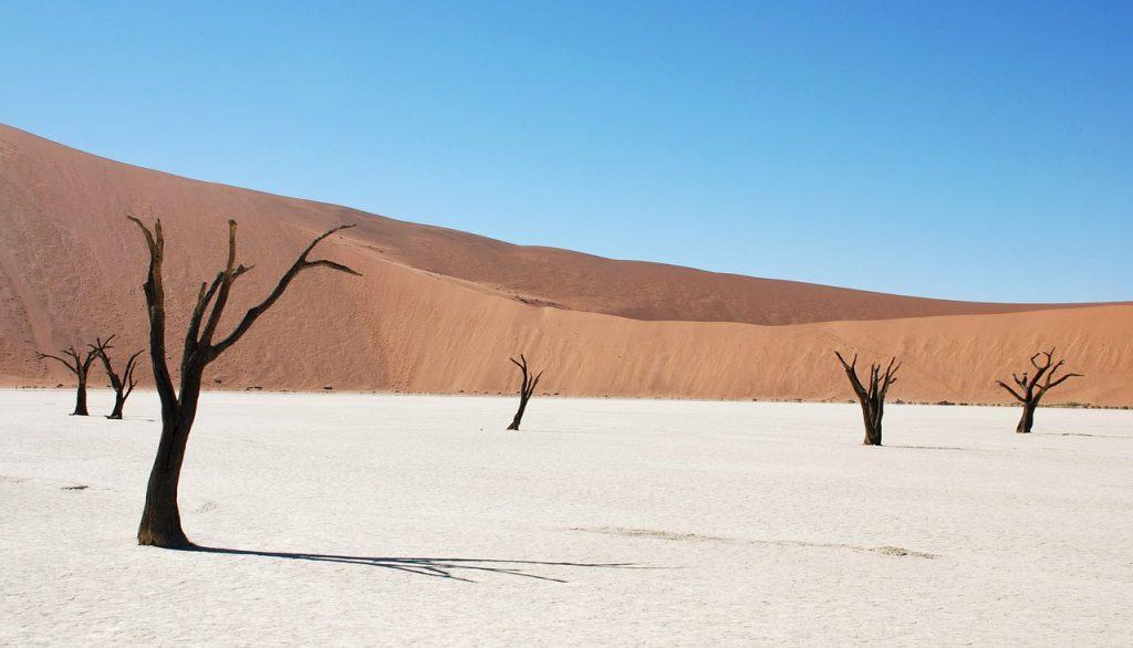 dune, desert, dead tree
