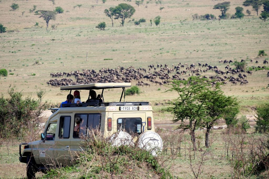 game drive, vehicle, animals