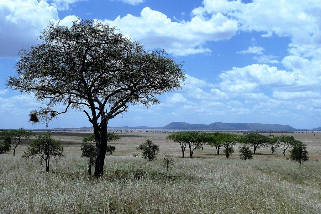 nature, africa, tanzania