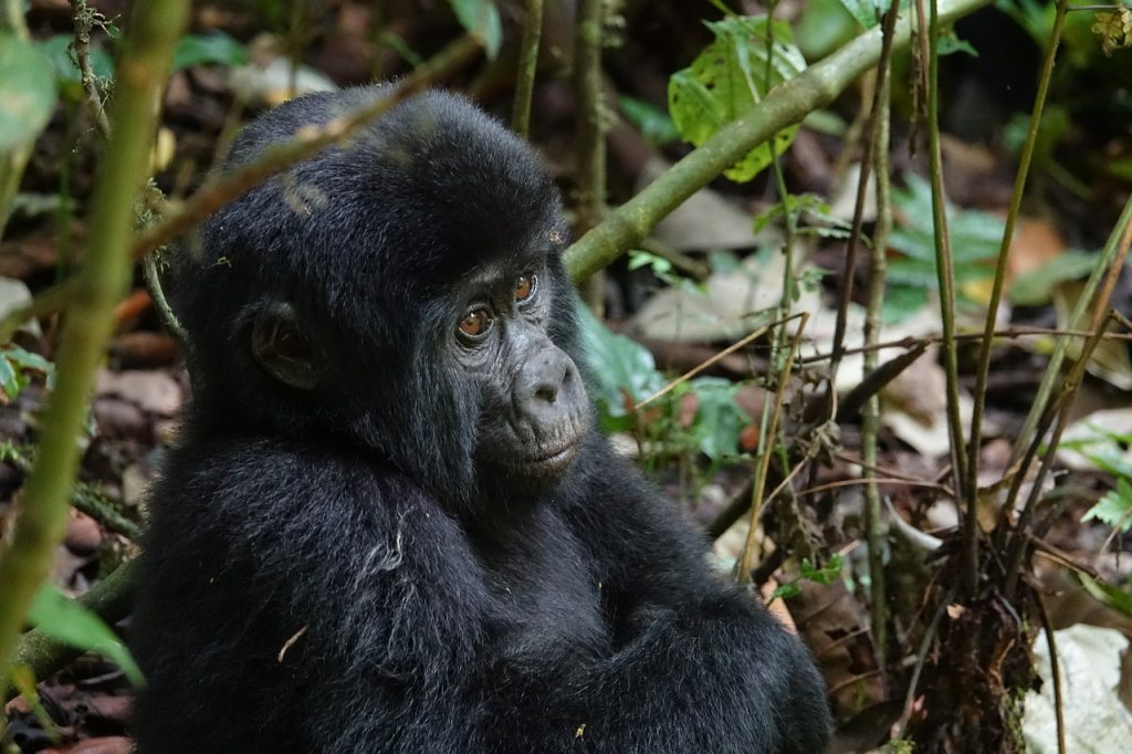 wildlife, mammal, primate