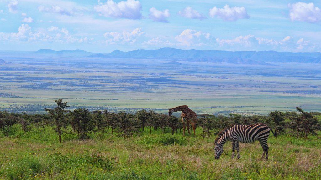 zebra, animal, tanzania