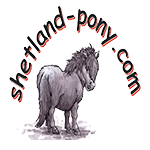 shetland-pony.com