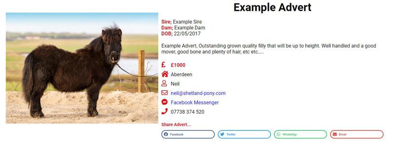 Advertise Shetland Pony