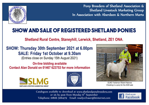 shetland pony sale