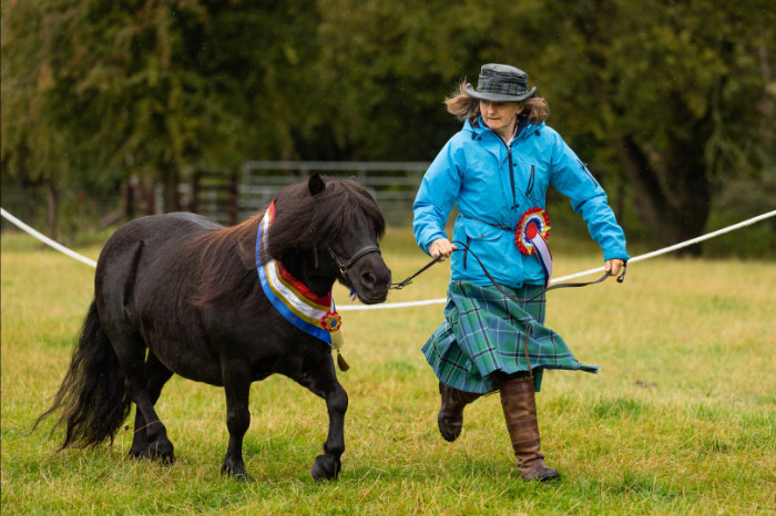 shetland pony show news