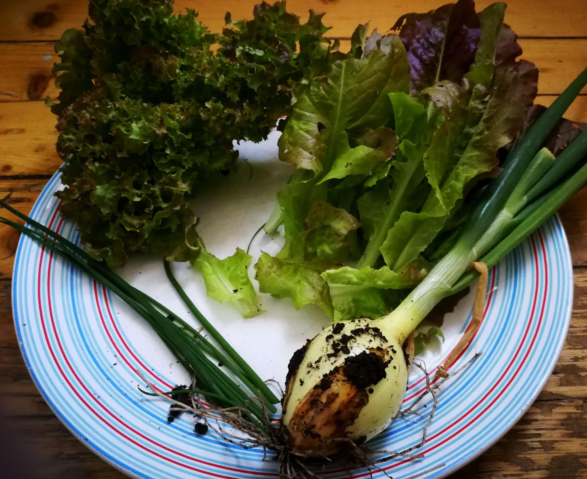 Ingredienser till salladssoppa