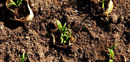 Spenat ungplantor - 20 grönsaker du kan så i augusti