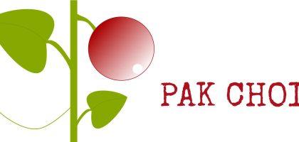 Julkalender - odlingsråd för pak choi