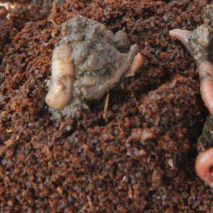 Kompostera inomhus - skapa din egen maskjordfabrik
