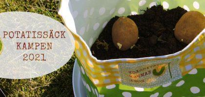 #Potatissäckkampen - får jag potatisar till midsommar