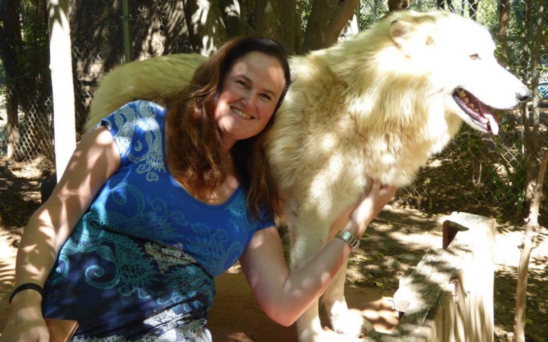 Hund drept av ulv