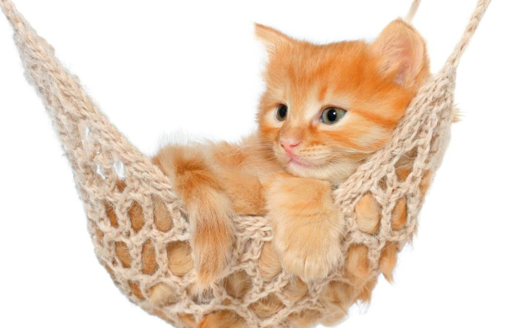 Katter bryr seg ikke om eieren sin, de er der bare for å få mat