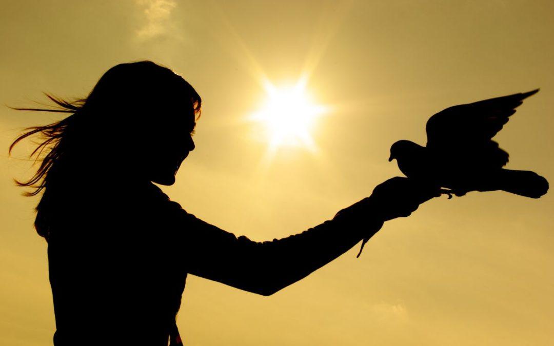 Den redde og sinte fuglen endret seg etter samtalen