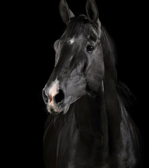 Hesten – en bestevenn eller en konkurransemaskin?