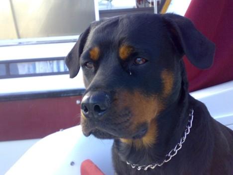 Hunden vår fikk det bedre etter samtalen med dyretolken