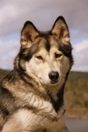 Hunden med den vonde albuen