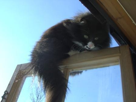Katten hadde et gammelt brudd i bekkenet