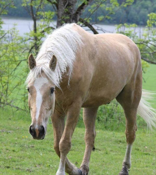 Hesten fortalte om sin personlighet og humor