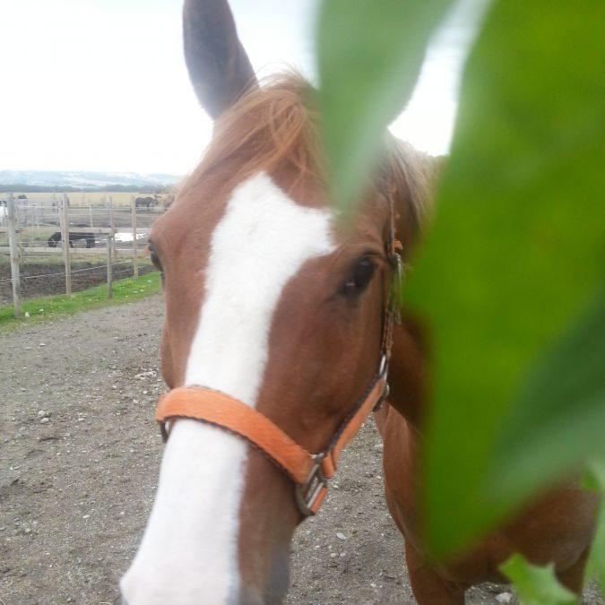 Dyretolken snakket med hesten vår
