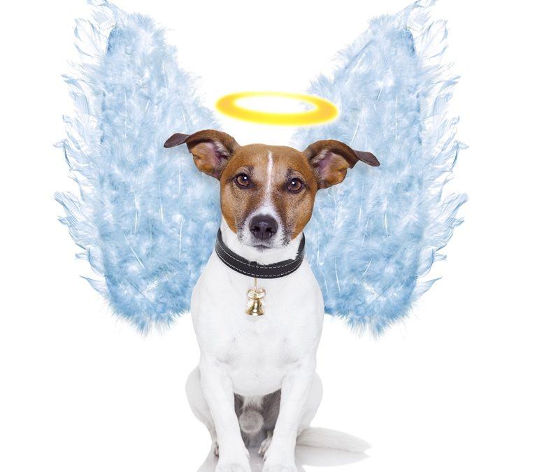 Hunden som var blitt en engel