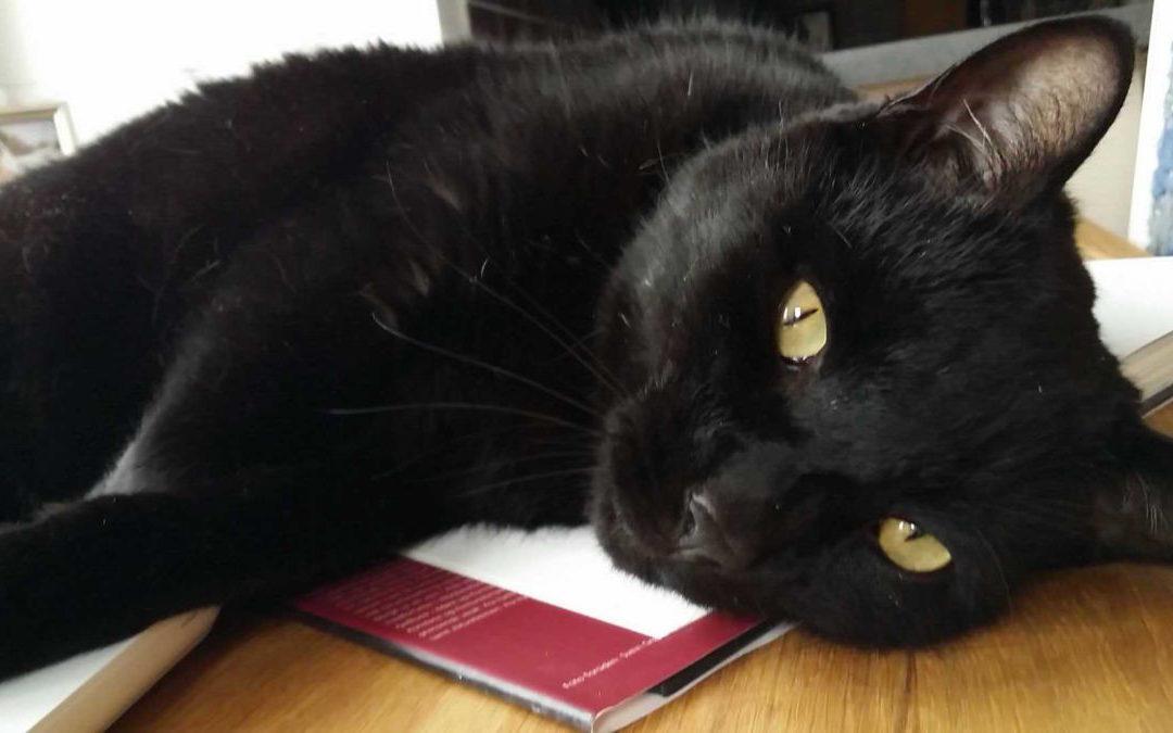 Katten visste at han skulle få hjelp og gjemte seg ikke da reiseburet kom frem